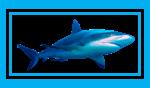 shark-blue