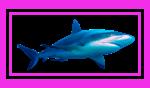 shark-pink